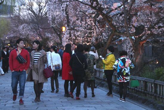 祇園白川夜桜 2015桜たより9_e0048413_21343810.jpg