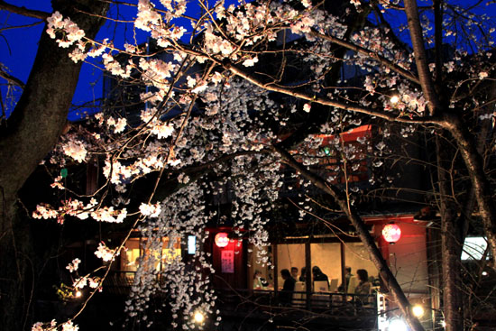 祇園白川夜桜 2015桜たより9_e0048413_21344663.jpg