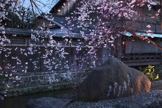 祇園白川夜桜 2015桜たより9_e0048413_2135153.jpg
