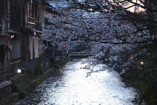 祇園白川夜桜 2015桜たより9_e0048413_21353050.jpg
