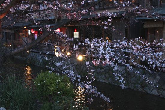 祇園白川夜桜 2015桜たより9_e0048413_2135680.jpg