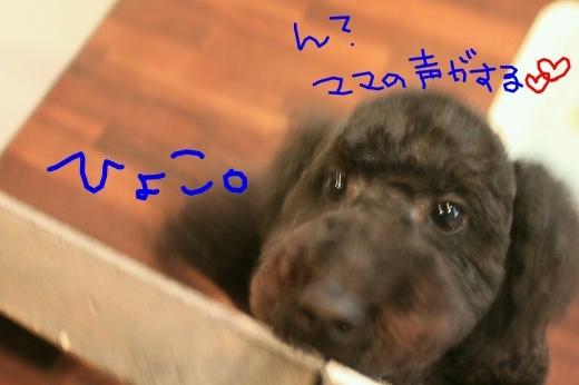 初めまして!!_b0130018_14043661.jpg