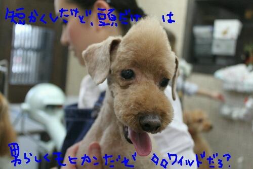 b0130018_2365860.jpg