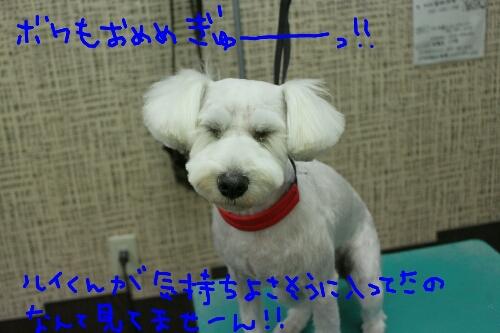 b0130018_2441112.jpg
