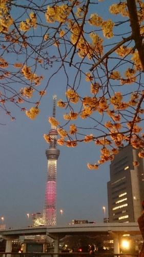 夜桜@隅田公園_e0219520_21323849.jpg