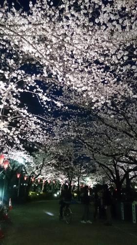 夜桜@隅田公園_e0219520_21323935.jpg