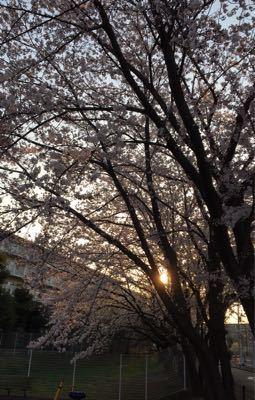 早朝ランニング ㊴ ➕ お花見ラン♪《その3》_b0203925_19493765.jpg