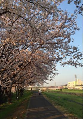 早朝ランニング ㊴ ➕ お花見ラン♪《その3》_b0203925_1949396.jpg