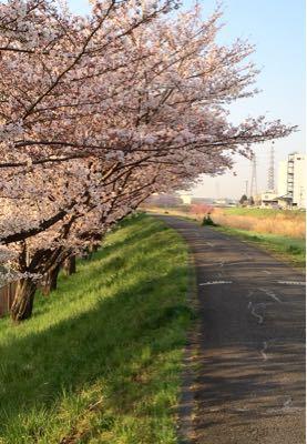 早朝ランニング ㊴ ➕ お花見ラン♪《その3》_b0203925_19494132.jpg