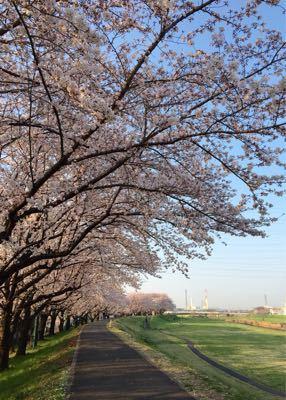 早朝ランニング ㊴ ➕ お花見ラン♪《その3》_b0203925_19494282.jpg