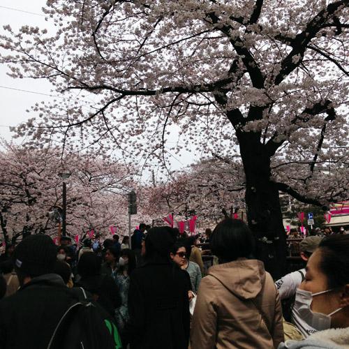 目黒川にお花見に。_a0026127_1483520.jpg