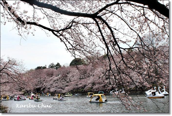 今年の桜_c0079828_17551172.jpg