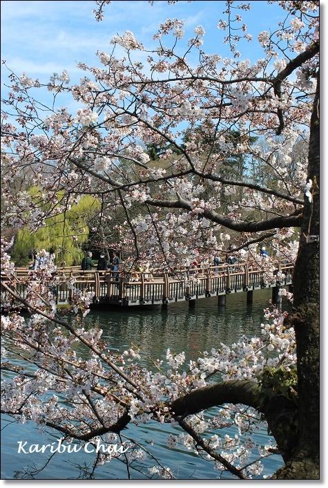 今年の桜_c0079828_17555321.jpg