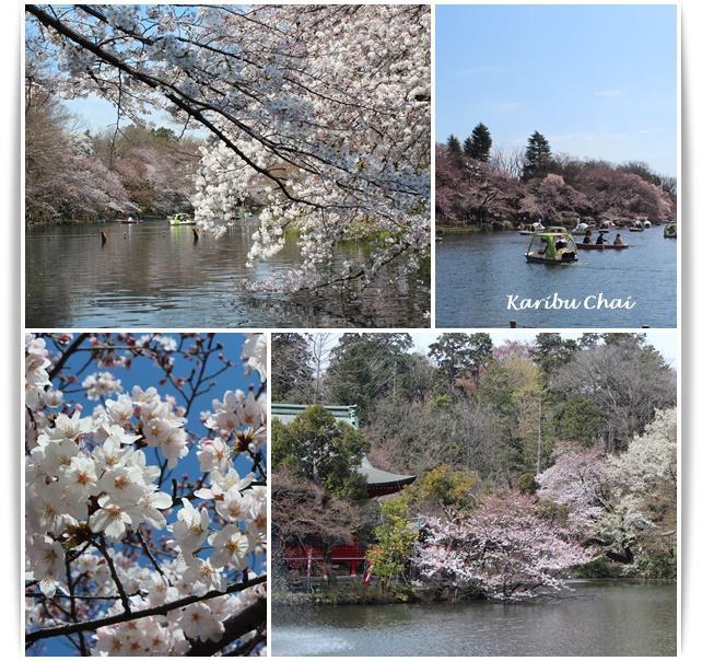 今年の桜_c0079828_1821077.jpg