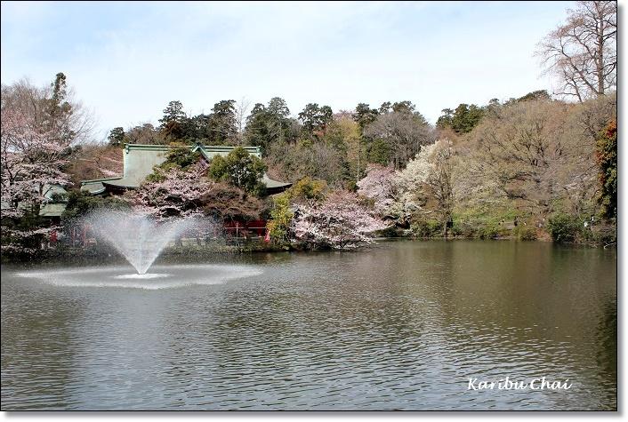 今年の桜_c0079828_22393731.jpg