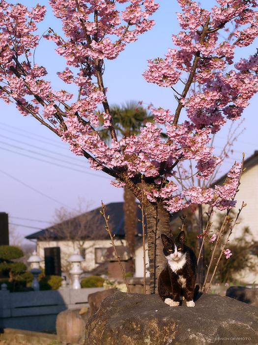 桜里標_f0197128_2021628.jpg