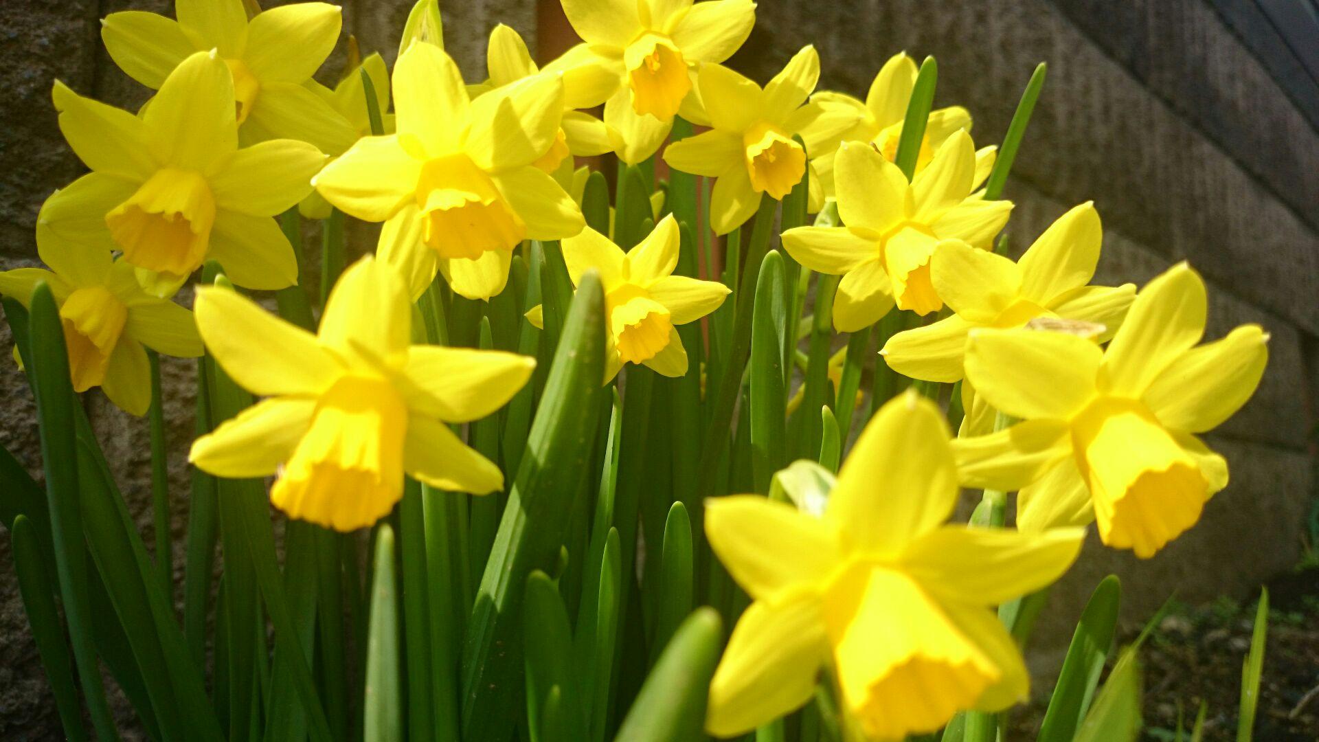 春が来た!来た!_d0180229_19343066.jpg
