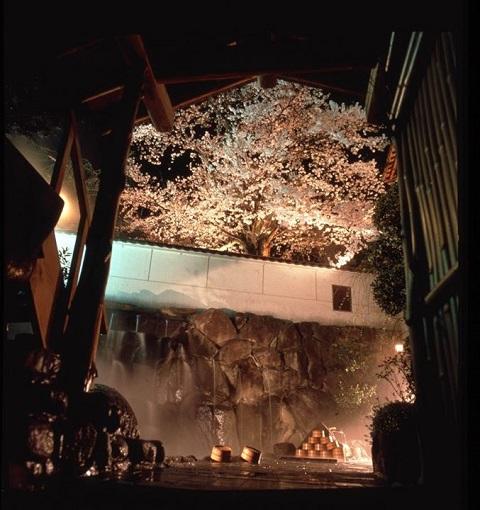 /// 朝野家・露天風呂の桜 3部咲き(3/30現在) 今年は早め!ぜひご入浴ください。///_f0112434_14234848.jpg