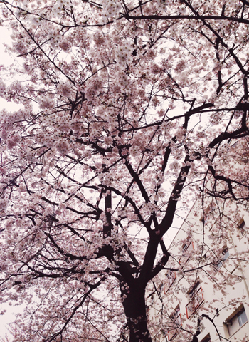 3/29 世田谷文学館 「岡崎京子展」での出来事_d0156336_0283630.jpg