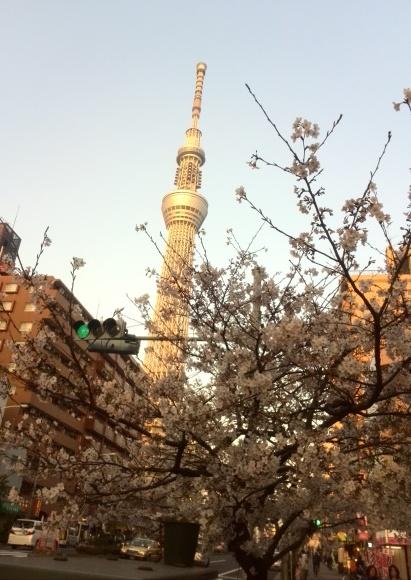 満開の桜🌸とスカイツリー🗼_f0340942_17580390.jpg