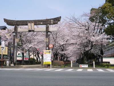 菊池神社、菊池公園の桜photoコレクション 2015_a0254656_20385435.jpg