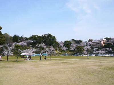 菊池神社、菊池公園の桜photoコレクション 2015_a0254656_21155692.jpg