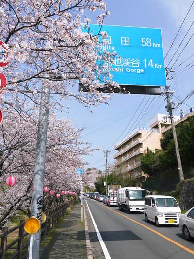 菊池神社、菊池公園の桜photoコレクション 2015_a0254656_21261160.jpg