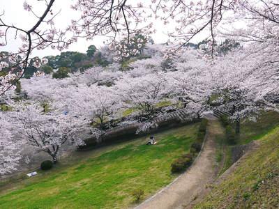 菊池神社、菊池公園の桜photoコレクション 2015_a0254656_21441488.jpg