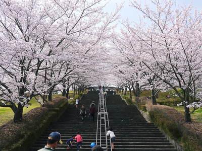菊池神社、菊池公園の桜photoコレクション 2015_a0254656_21461054.jpg