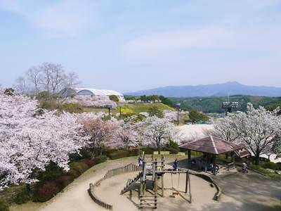 菊池神社、菊池公園の桜photoコレクション 2015_a0254656_22104527.jpg