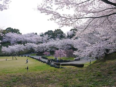菊池神社、菊池公園の桜photoコレクション 2015_a0254656_2232444.jpg