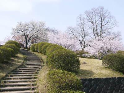 菊池神社、菊池公園の桜photoコレクション 2015_a0254656_22333372.jpg