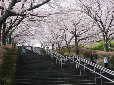 菊池神社、菊池公園の桜photoコレクション 2015_a0254656_22412870.jpg