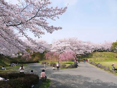 菊池神社、菊池公園の桜photoコレクション 2015_a0254656_2242797.jpg