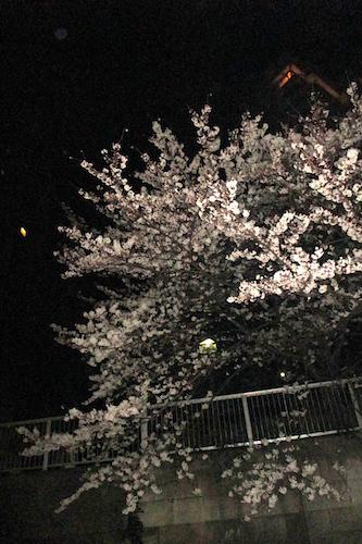 お花見クルーズ_f0053164_09233828.jpg
