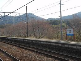 駅の桜が開花しました_e0175370_910470.jpg