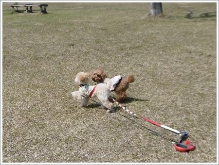 貴重な晴れ間は短そう、だから公園で遊ぼう!!(v´∀`*) イエーイ♪_b0175688_20552189.jpg