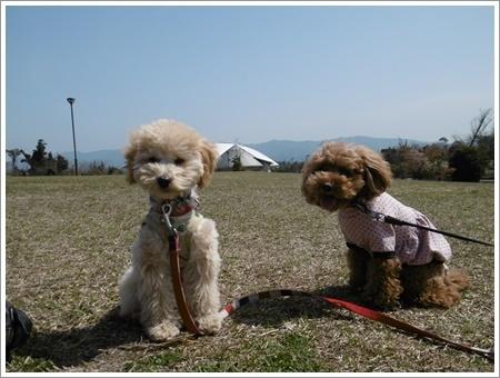 貴重な晴れ間は短そう、だから公園で遊ぼう!!(v´∀`*) イエーイ♪_b0175688_20553415.jpg