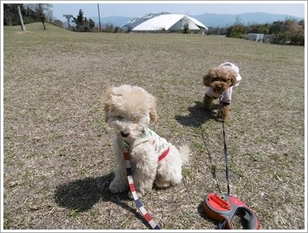 貴重な晴れ間は短そう、だから公園で遊ぼう!!(v´∀`*) イエーイ♪_b0175688_20553667.jpg