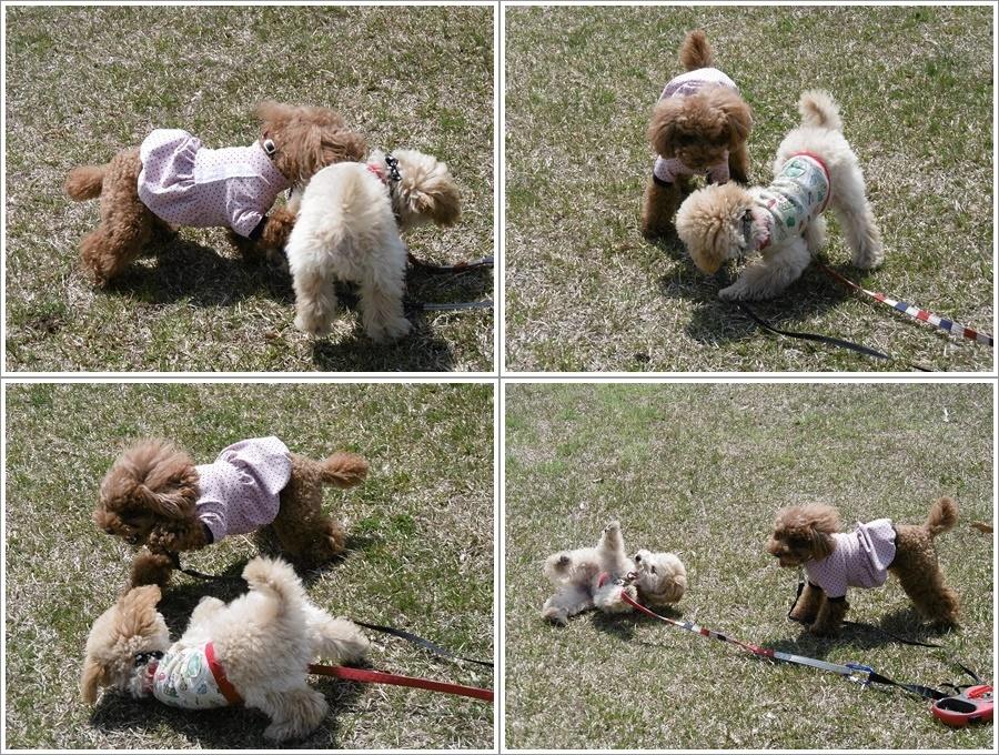 貴重な晴れ間は短そう、だから公園で遊ぼう!!(v´∀`*) イエーイ♪_b0175688_20570038.jpg