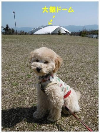 貴重な晴れ間は短そう、だから公園で遊ぼう!!(v´∀`*) イエーイ♪_b0175688_20583589.jpg