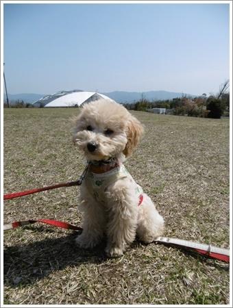 貴重な晴れ間は短そう、だから公園で遊ぼう!!(v´∀`*) イエーイ♪_b0175688_20583840.jpg