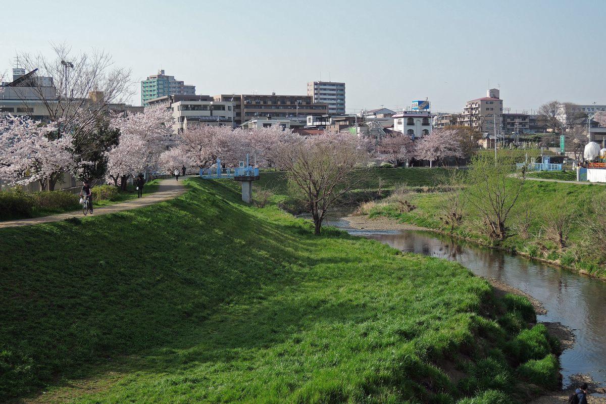 桜2015②黒目川_c0252688_19413876.jpg