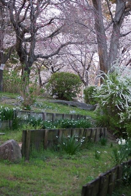 藤田八束の桜前線の旅:藤田八束の地方創生を考える、桜と観光、日本の桜は世界一_d0181492_21403523.jpg