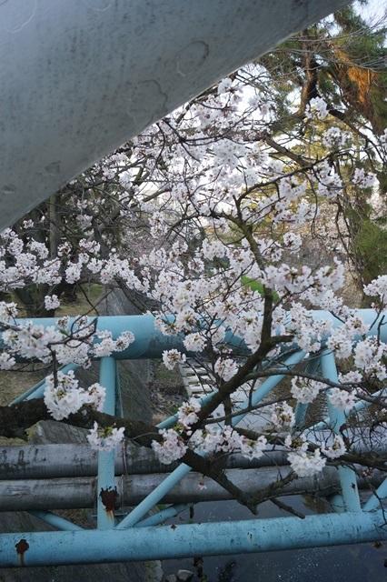 藤田八束の桜前線の旅:藤田八束の地方創生を考える、桜と観光、日本の桜は世界一_d0181492_2143022.jpg