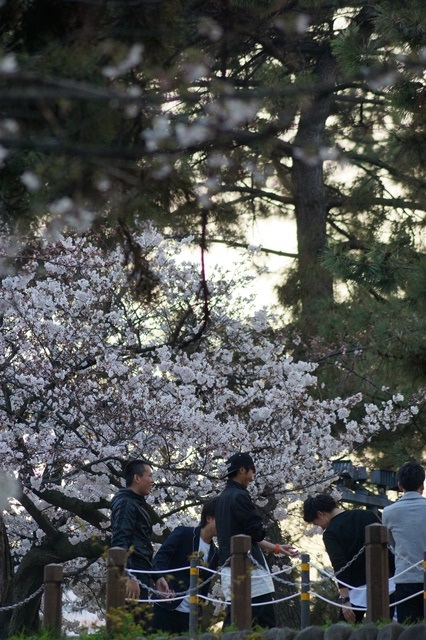 藤田八束の桜前線の旅:藤田八束の地方創生を考える、桜と観光、日本の桜は世界一_d0181492_21445349.jpg