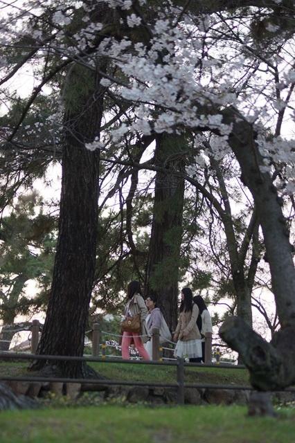 藤田八束の桜前線の旅:藤田八束の地方創生を考える、桜と観光、日本の桜は世界一_d0181492_21452591.jpg