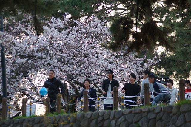 藤田八束の桜前線の旅:藤田八束の地方創生を考える、桜と観光、日本の桜は世界一_d0181492_214595.jpg