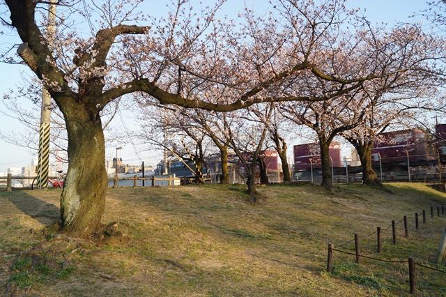 藤田八束の桜前線の旅:藤田八束の地方創生を考える、桜と観光、日本の桜は世界一_d0181492_2147056.jpg