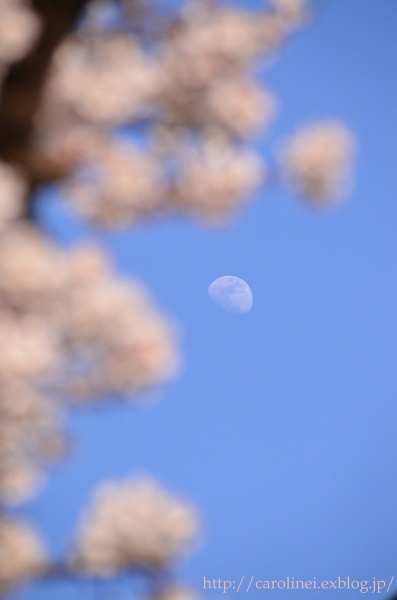 ご近所お花見  Cherry Blossom Viewing_d0025294_21171043.jpg